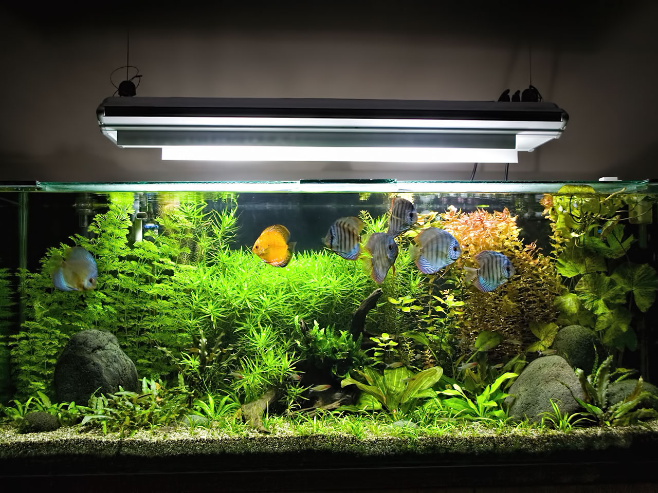 Aquarium Beleuchtung