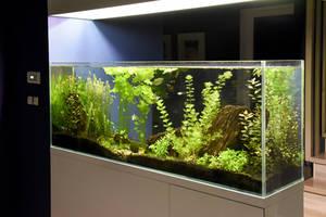 Süßwasseraquarium Beleuchtung