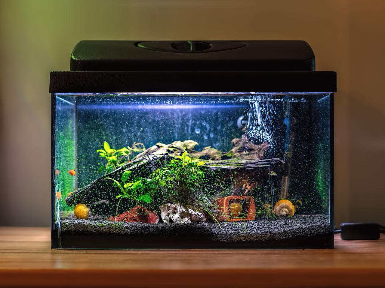 Aquarium Technik in einem Süßwasseraquarium
