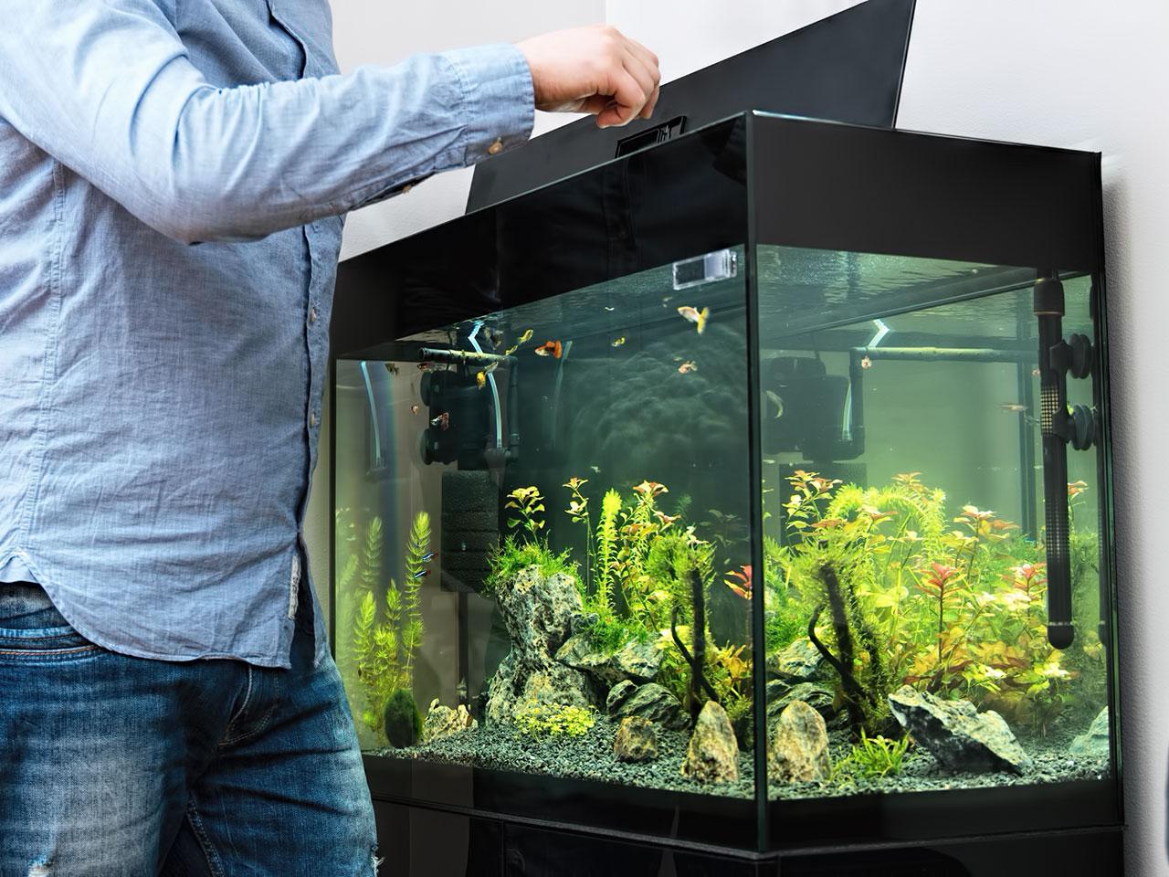 Zierfisch Aquarium