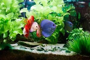 Biorb aquarium gebraucht neu g nstig kaufen verkaufen for Suche zierfische