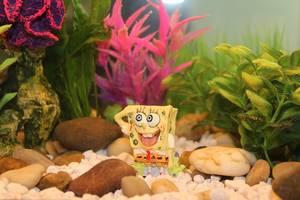 Spongebob im Aquarium