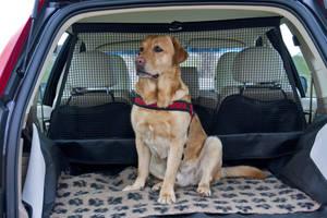 Auto Hundeschutznetz