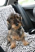 Hund sitzt auf Autoschondecke
