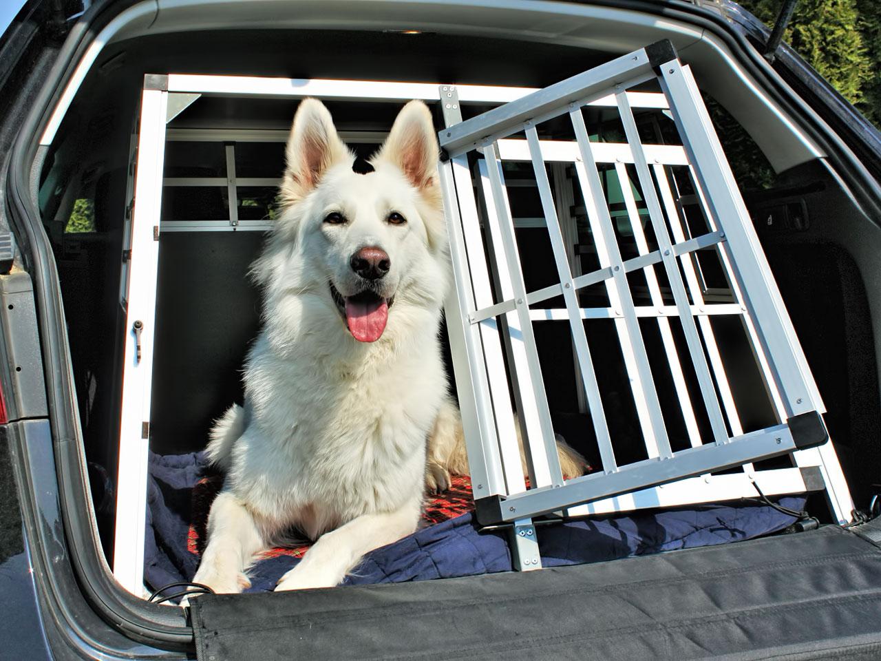 Hund schaut aus offenem KFZ Alukäfig