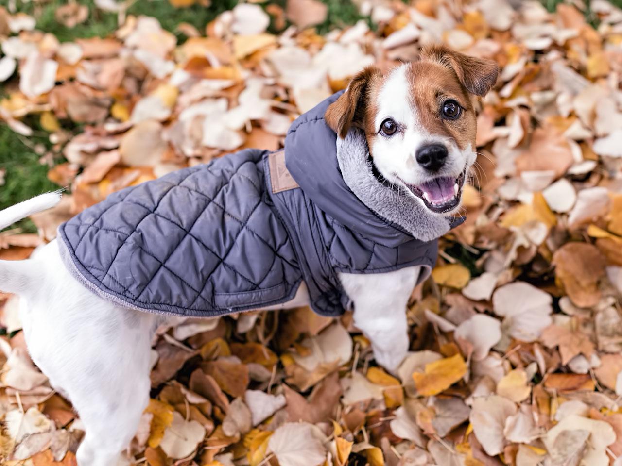 Hund mit hübschen Hundemantel