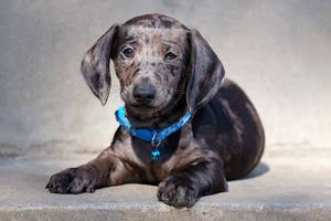 Hund mit Halsbandanhänger