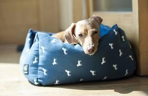 Hund auf Hundecouch
