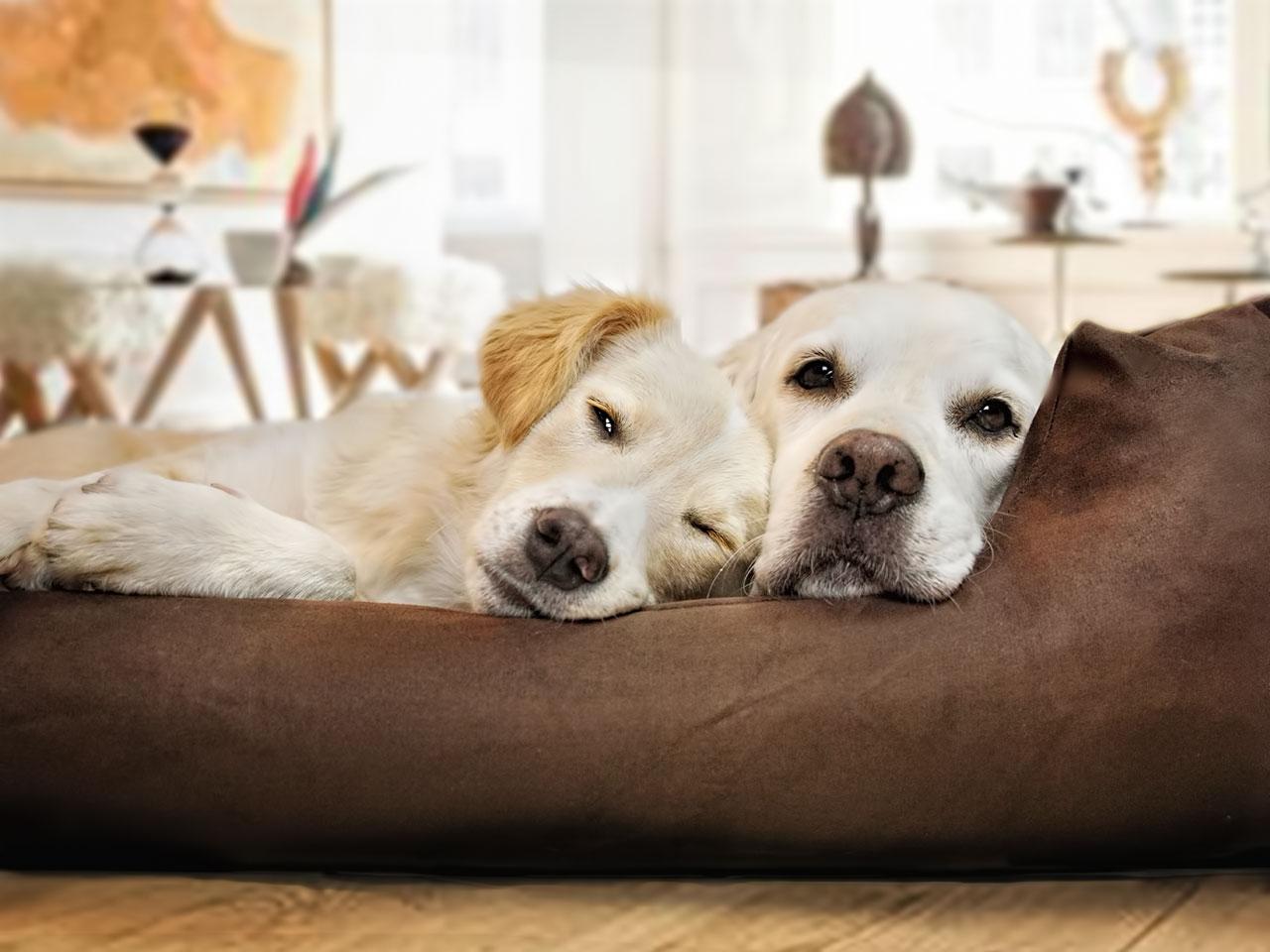 2 Hunde im Hundekorb