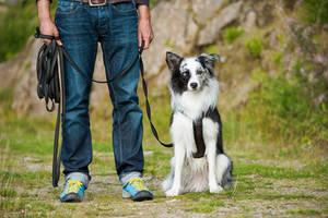 Hund an einer Schleppleine
