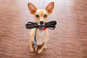 Hund mit Lederleine