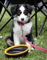 Hund mit Reisenapf