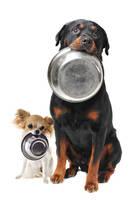 Hunde mit Edelstahl Futternapf