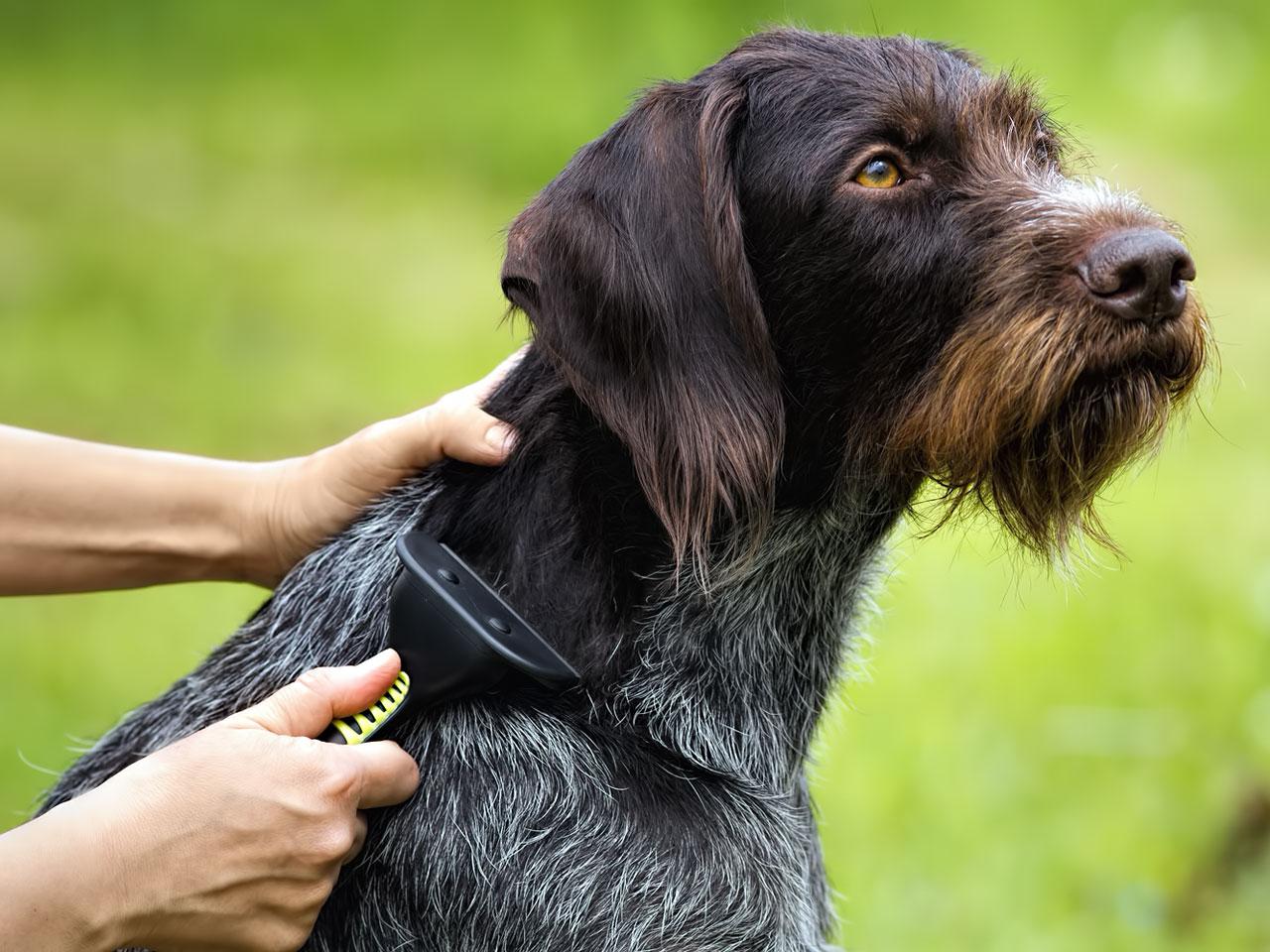 Hundepflege Produkte