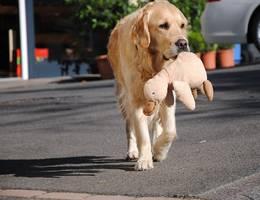 Hund mit Plüschente