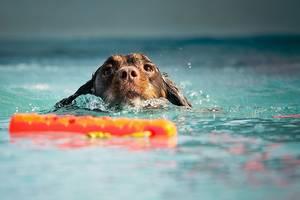 Hund mit Wasserspielzeug