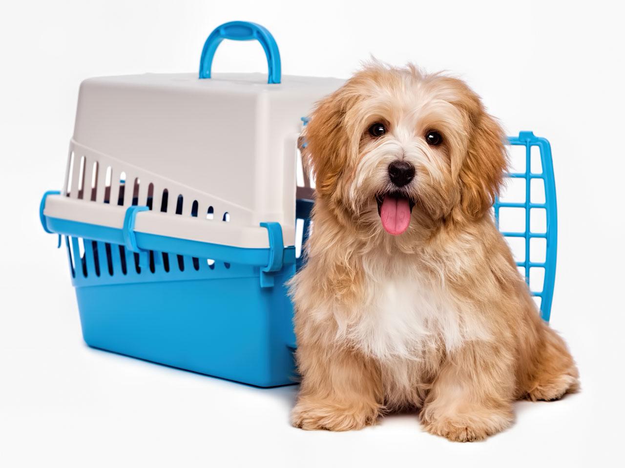 Süßer Hund sitzt vor Hundetransportbox