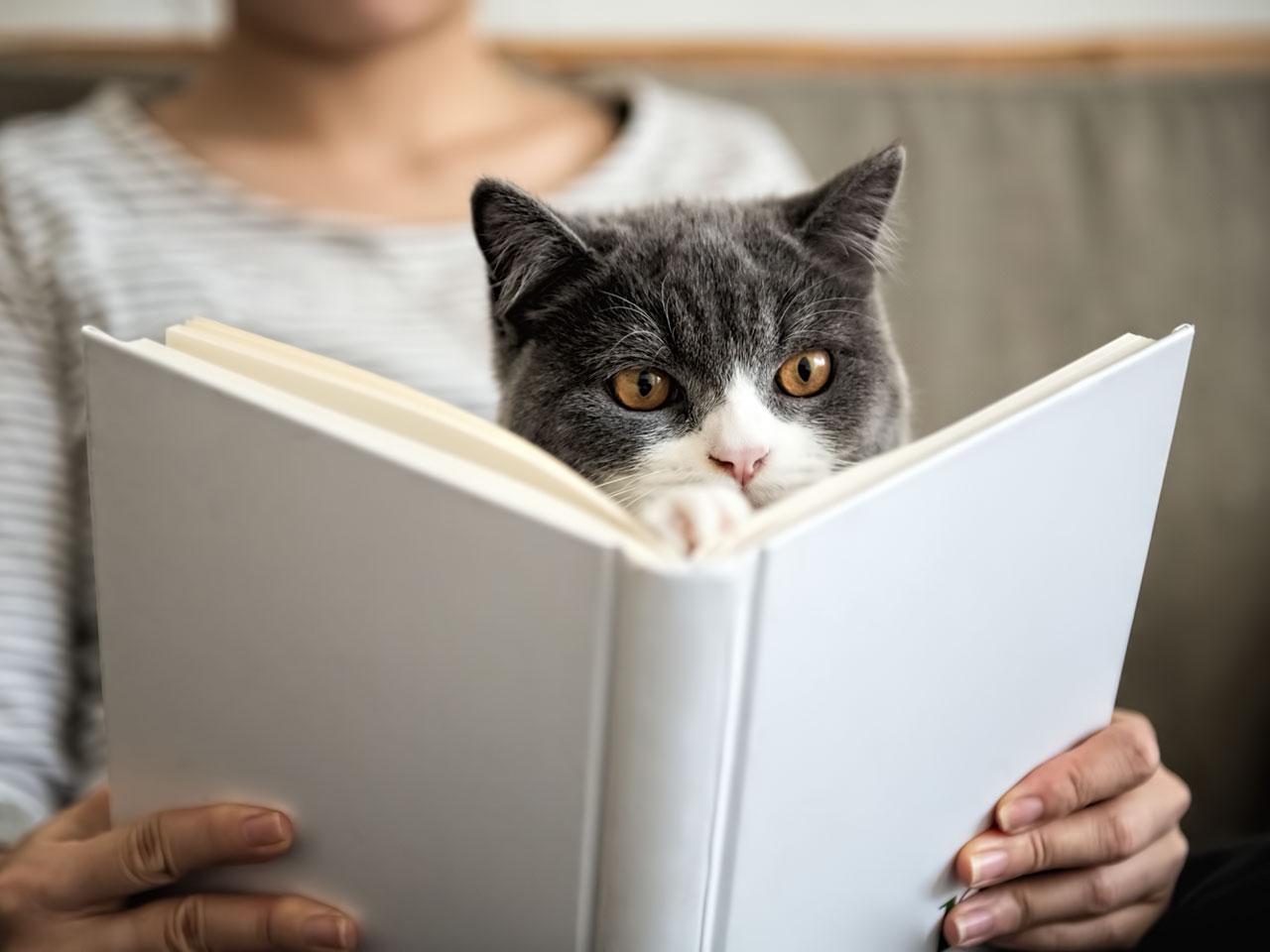 Frau und Katze beim Buch lesen