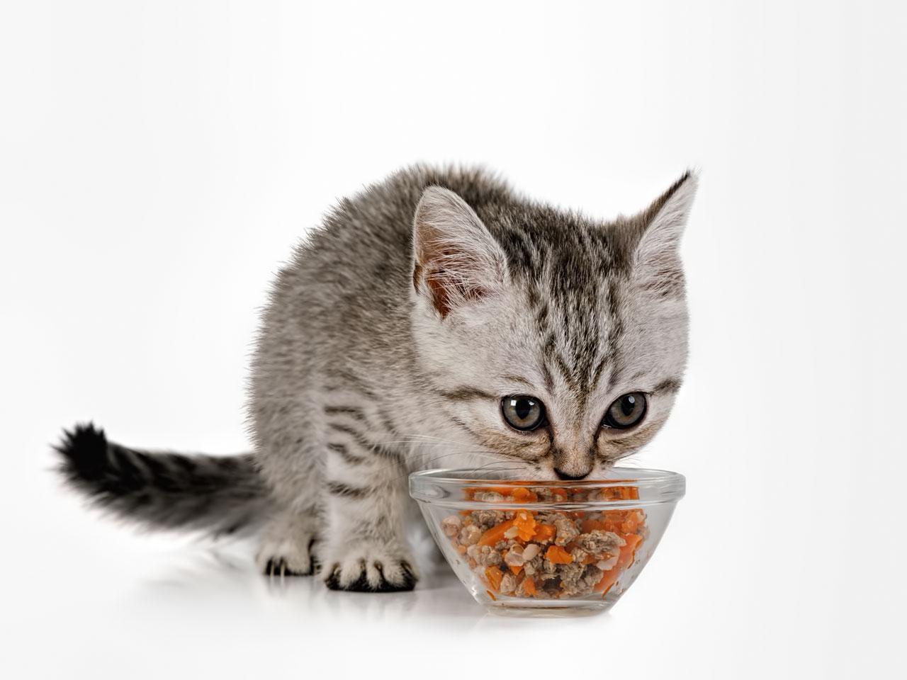 Katzenbaby frisst Kittenfutter
