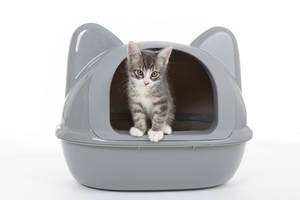 Katze schaut aus Haubentoilette