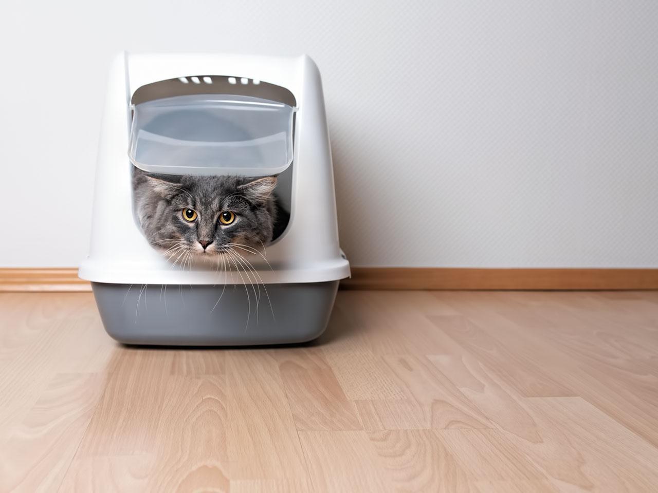 Katze schaut aus Katzentoilette