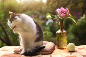 Katze auf Katzenkissen