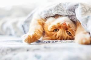 Katze in Katzendecke
