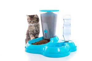 Futterautomat für Katze