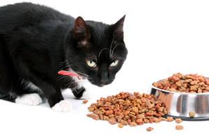 Katze frisst aus Edelstahlnapf