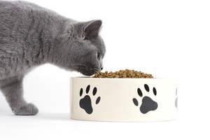 Katze frisst aus Keramiknapf