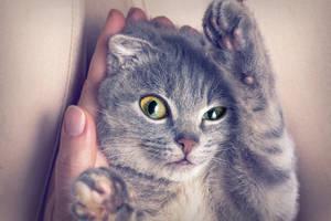 Katzen Augenpflege