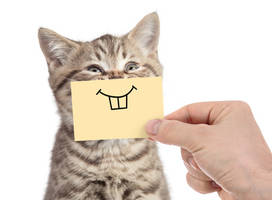 Katzen Zahnpflege