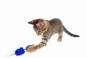 Katze mit Spielzeugmaus