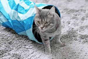 Katze schaut aus Katzentunnel