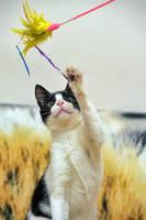 Katze spielt mit Angel