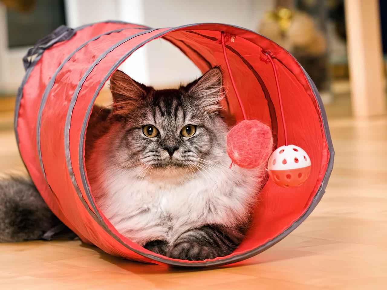 Katze liegt in einem roten Katzentunnel