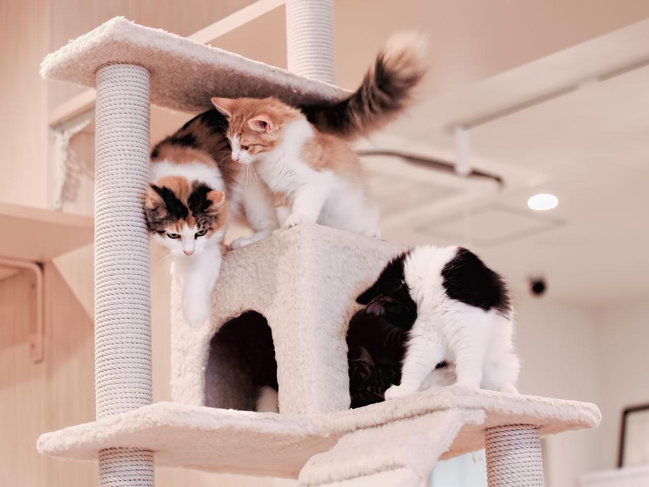 Katzen spielen auf Kratzbaum