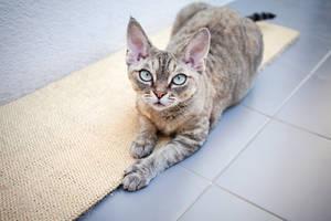 Katze mit Kratzbrett