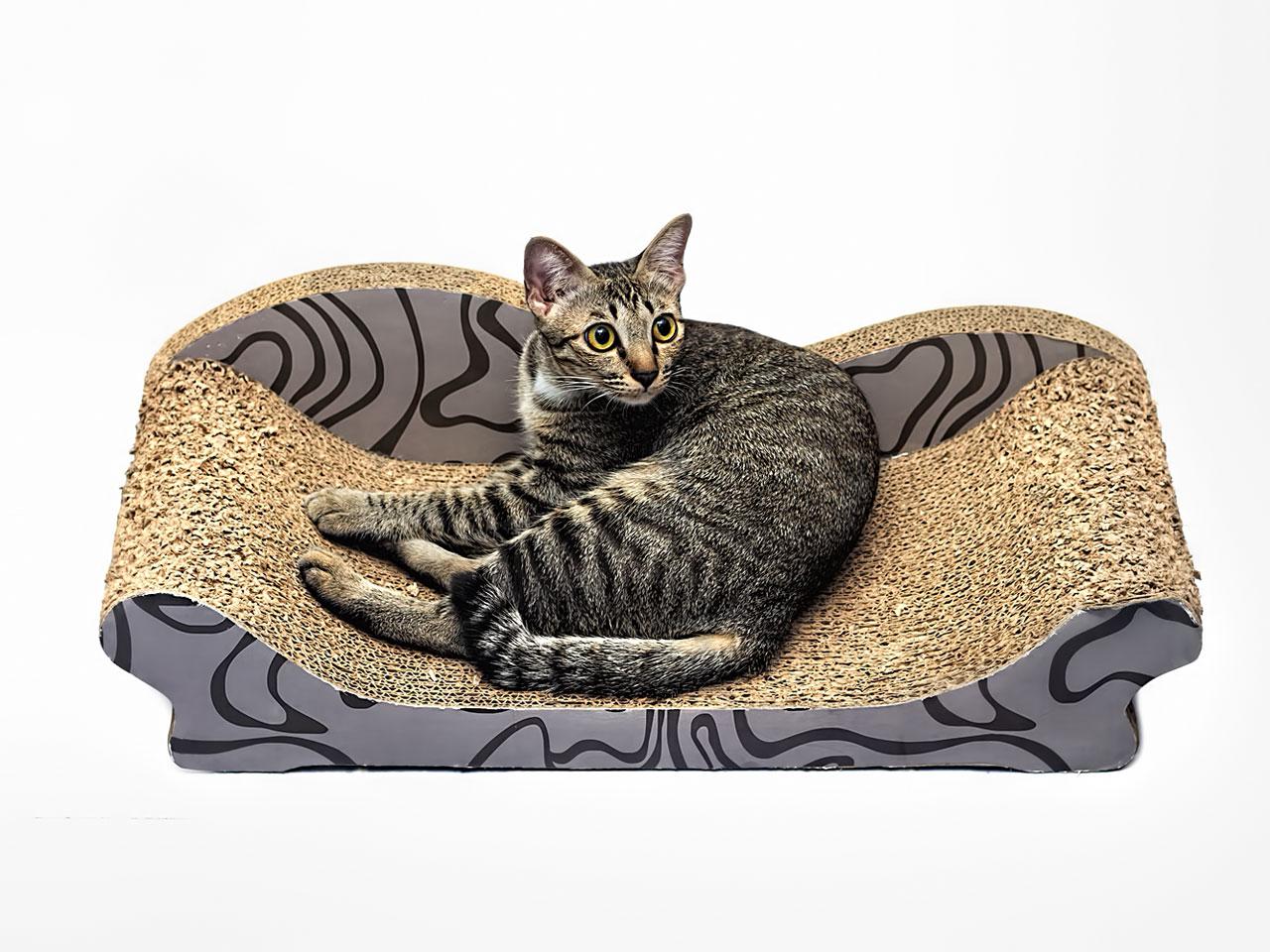 Katze liegt auf stylischem Kratzbrett