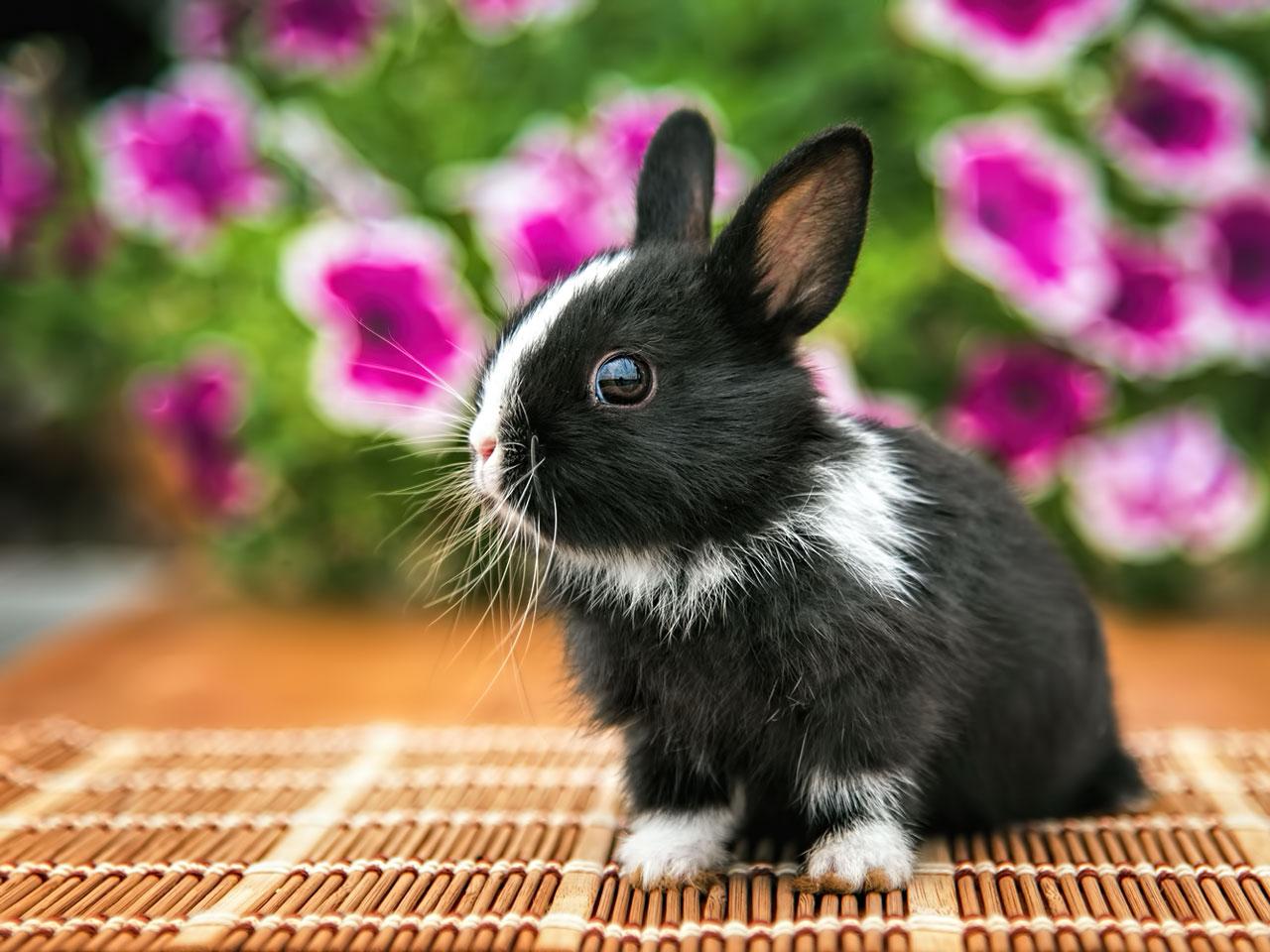 kleintierb rse kaninchen kaufen verkaufen. Black Bedroom Furniture Sets. Home Design Ideas