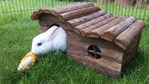 Kaninchen im Holzhaus