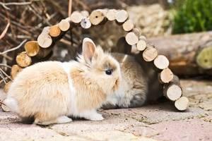 Kaninchen unter Holzbrücke
