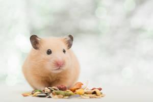 Hamster sitzt vor Futter