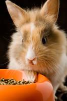 Kaninchenfutter