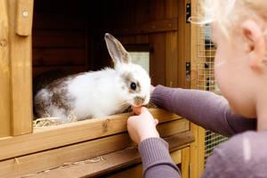 Fütterung im Kaninchenstall