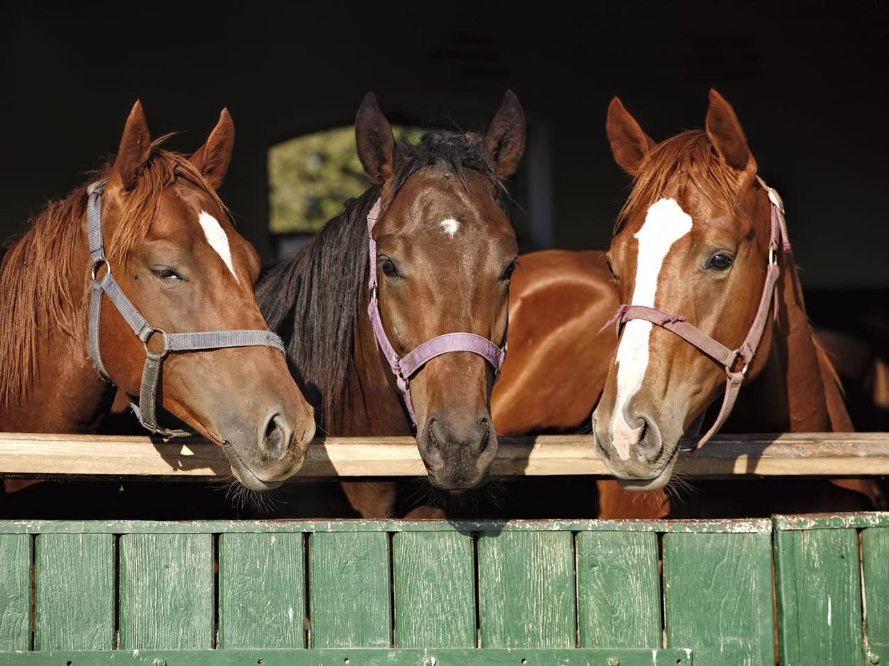 Pferd im Pferdestall