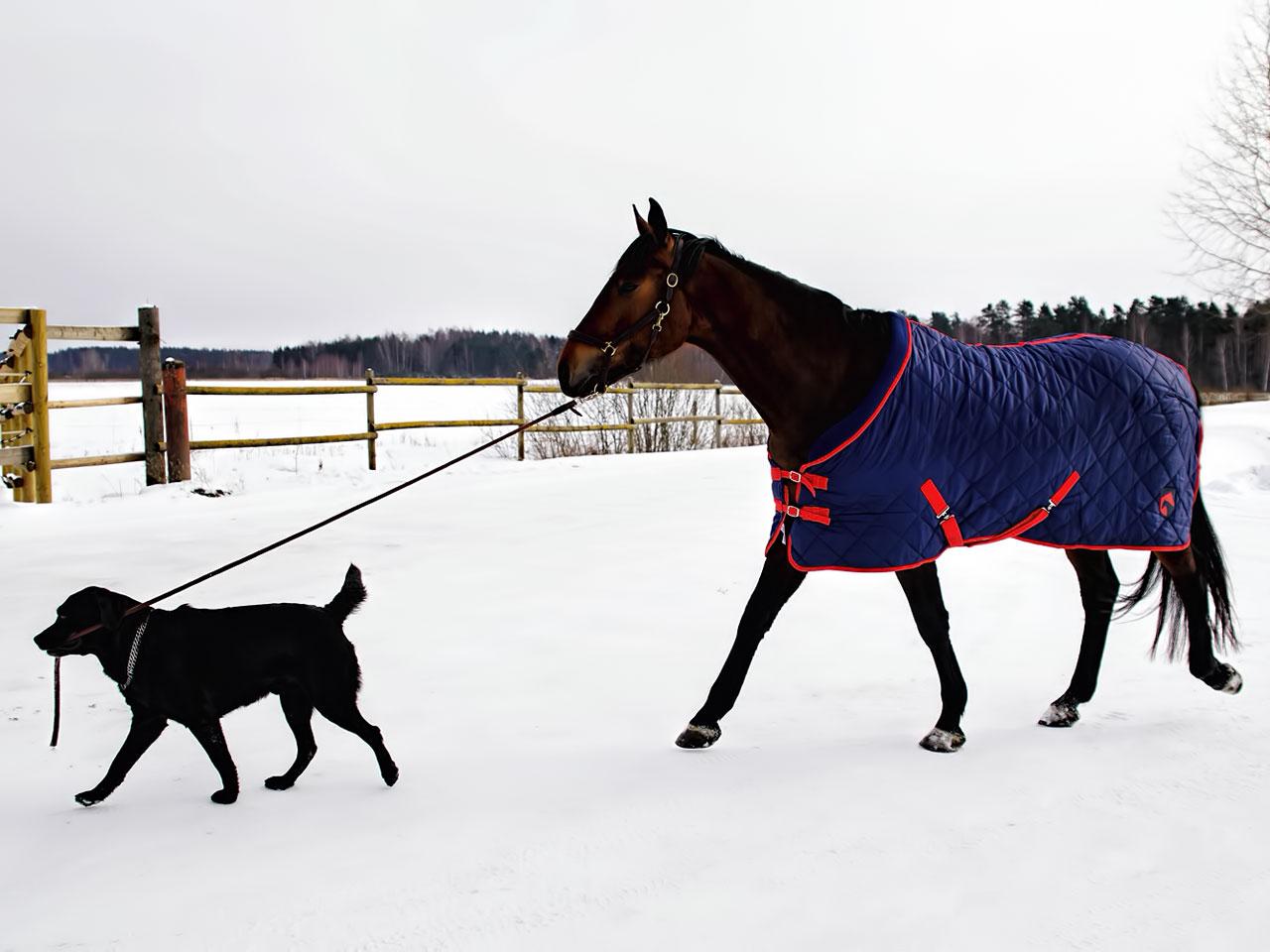 Pferd mit einer Winterdecke