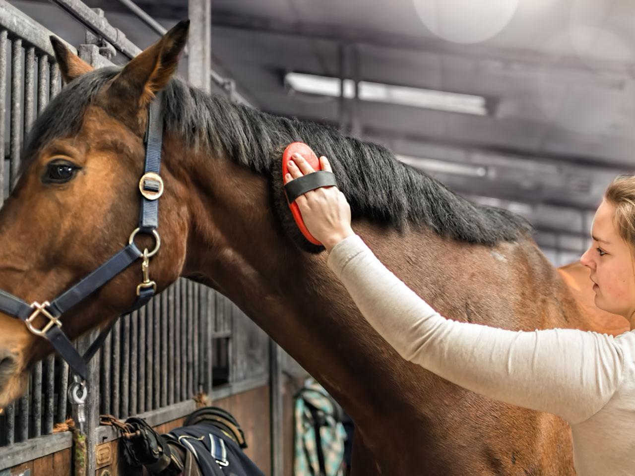 Pferd wird gebürstet