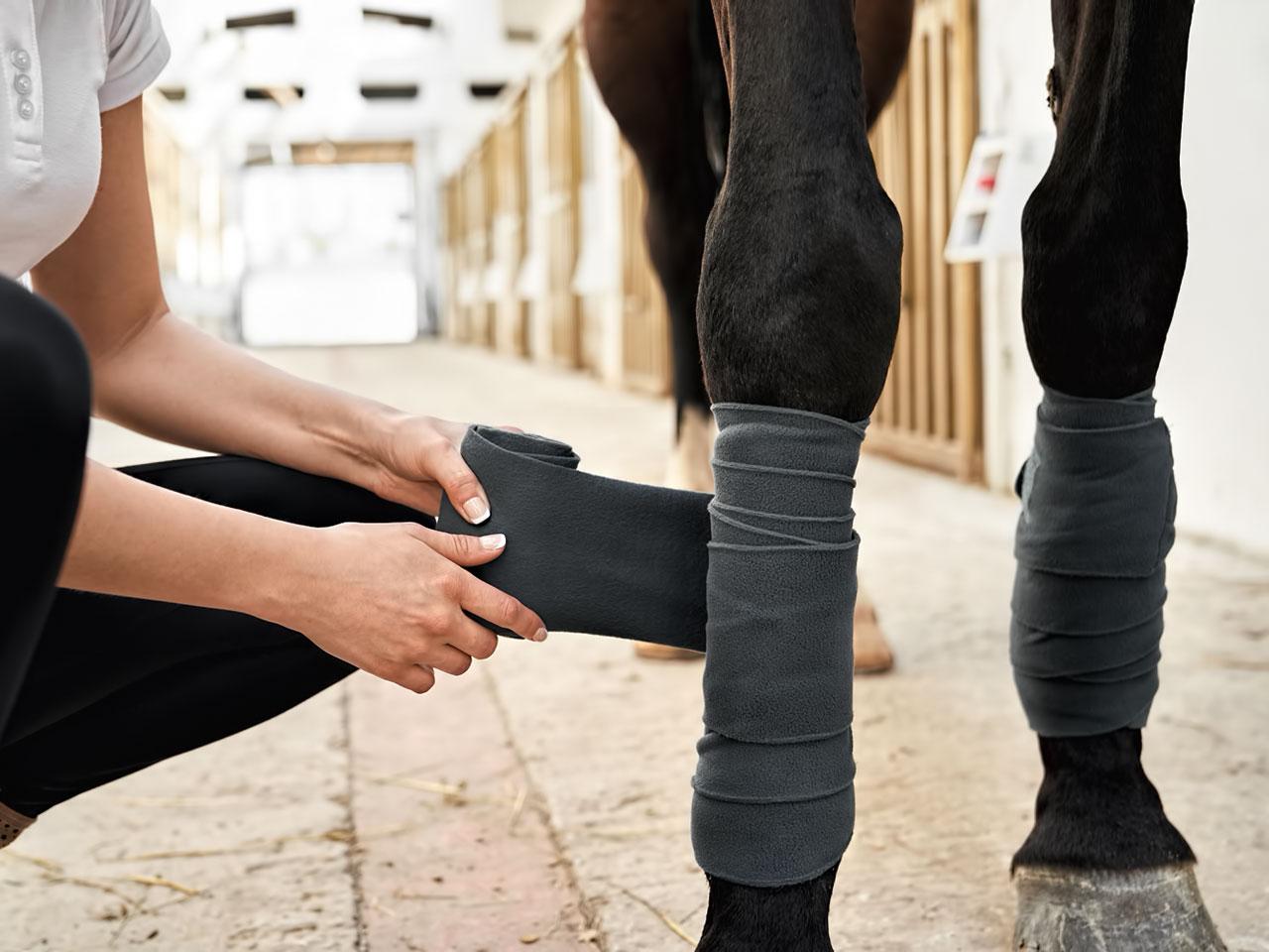 Pferd werden Bandagen angelegt