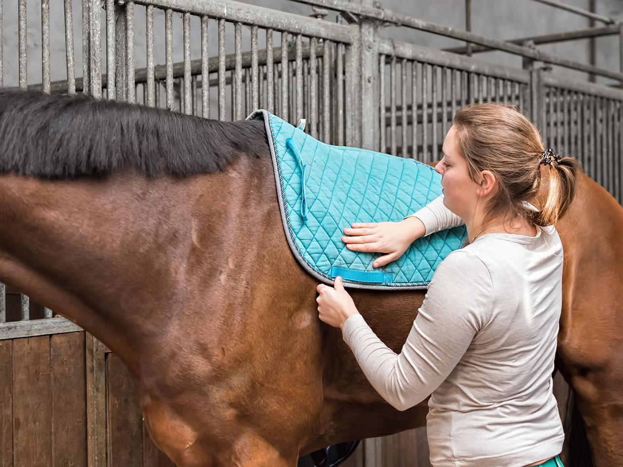 Schabracke wird auf <a href='https://www.tieranzeigen.com/pferde/' title='Kleinanzeigen: Pferd kaufen & verkaufen' class='link_xl'>Pferd</a> gelegt